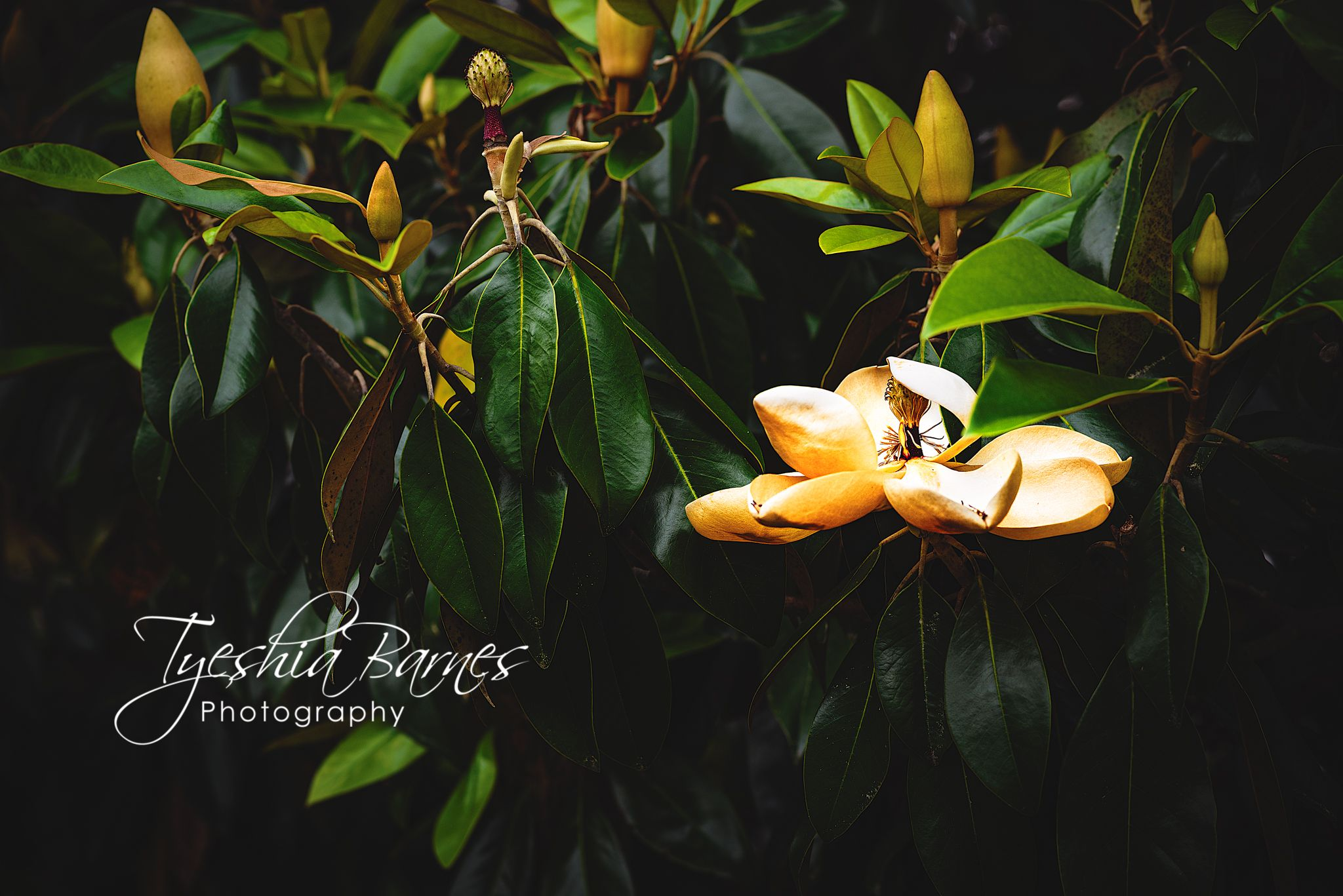 Everything has its place in life #naturephotography #blacklivesmatter #travel #travelphotographer #nature #landscape #commercialphotography #commercial #photographylover #photographylovers #photographylife #fineart #park #tree #magnolia