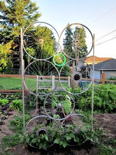 A bicycle wheel garden trellis! - The Bicycle Recycled | Bicycle Alliance of WashingtonBicycle Alliance of Washington
