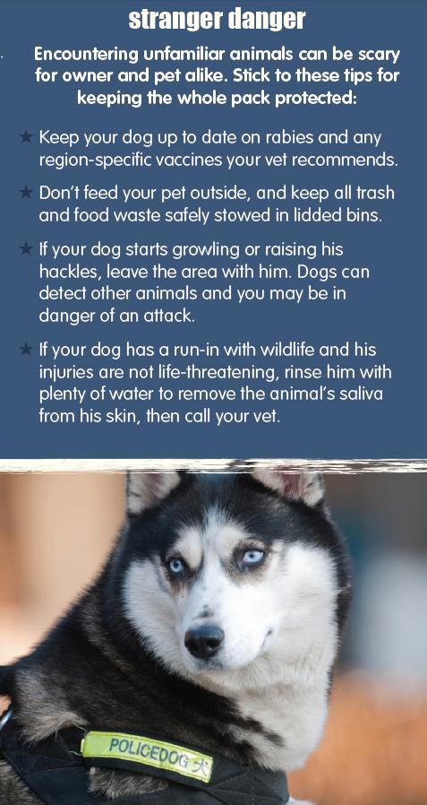 Pet Health Pet Safety Tips Pet Wellness Plans Petplan Pet