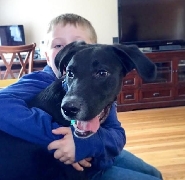 Adopt Porter On Adoption Pound Puppies Puppies