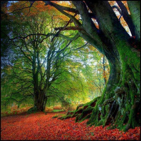 Imagine writing curled up in the roots of this tree. :)