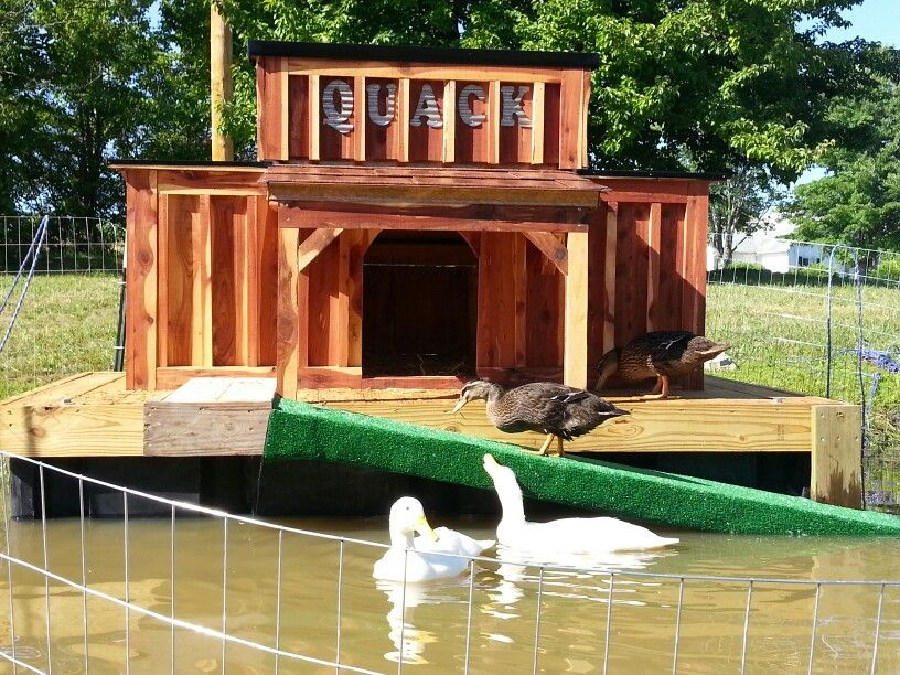 First day new floating duck house in use they love it for Duck and goose houses
