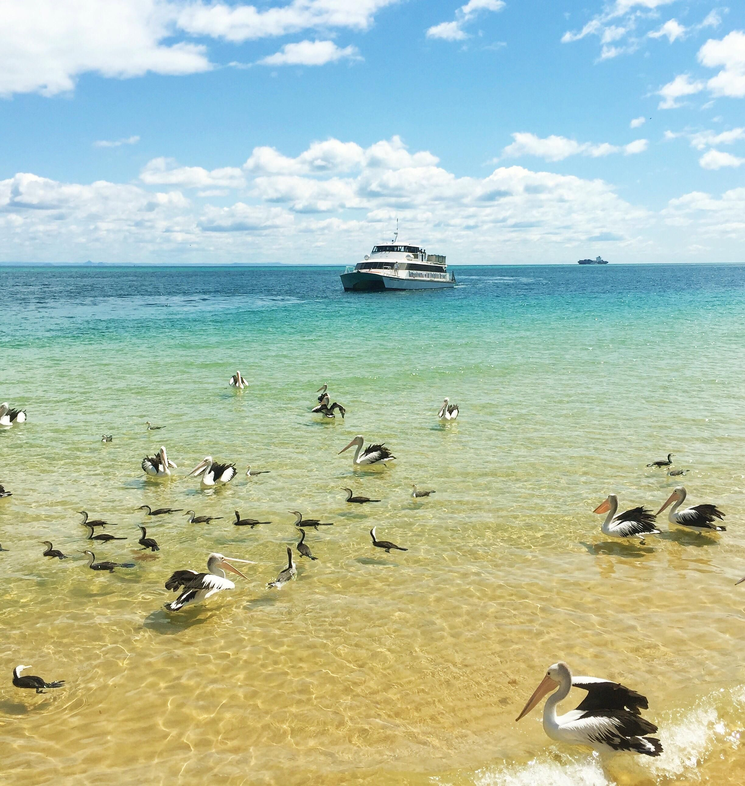 Tangalooma Island Queensland Australia. Loved this place! An old picture but thought of sharing it with you guys. #travel #ttot #nature #photo #vacation #Hotel #adventure #landscape http://bit.ly/2o9IWvs