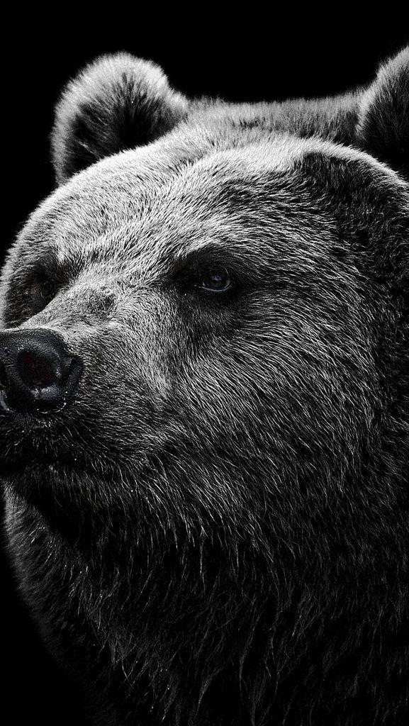 Bear Grizzly Bear Eyes Nose 85885 640x1136 Grizzly Bear Polar Bear Wallpaper Bear Pictures