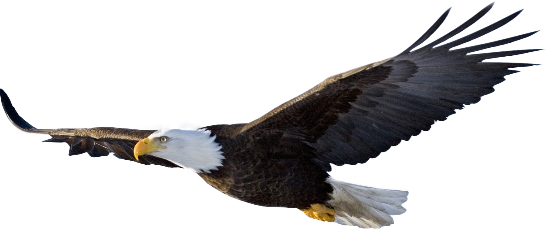 Imgur The Most Awesome Images On The Internet Eagle In Flight Bald Eagle Bald Eagle Images