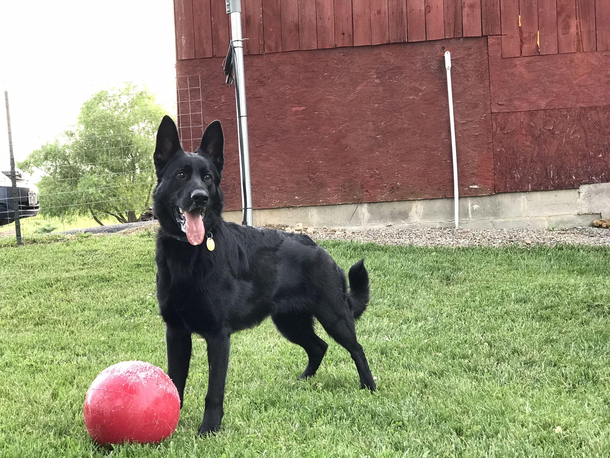 Korben Dallas 8 Mos Pets Dallas