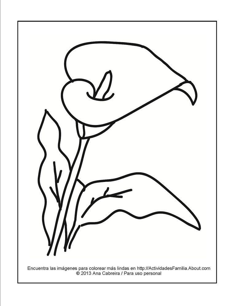 Lindos Dibujos De Flores Para Colorear Rosas Calas