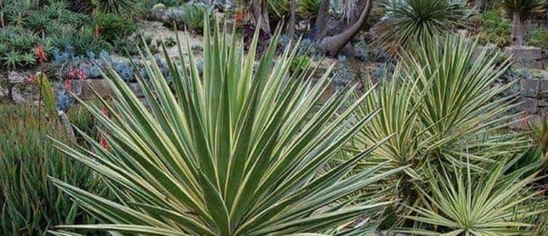 Best Hot Weather Plants Plants, Salvia plants, Outdoor