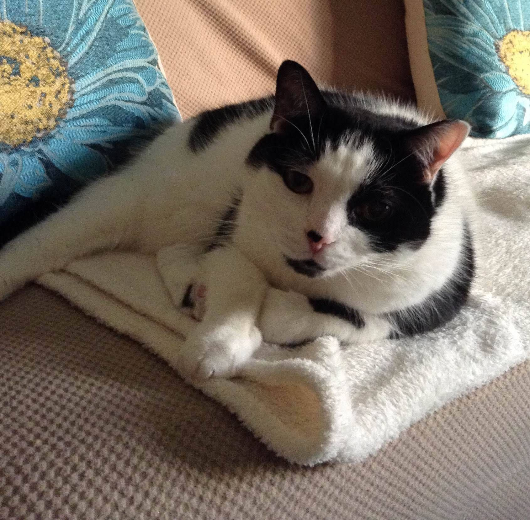 Mookie's Year With Kidney Disease Pet news, Your pet
