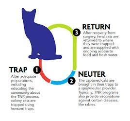 Why Trap Neuter Return Tnr Neuter Feral Cats Petsmart