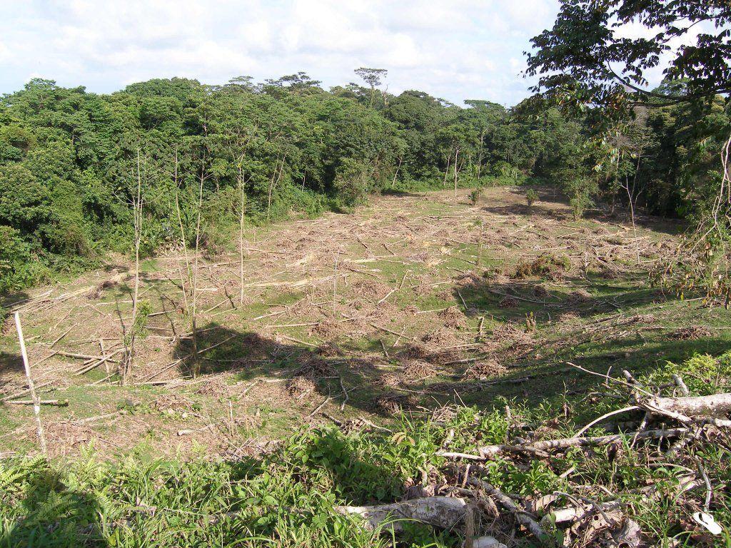 Un Impacto Ambiental Es El Efecto Que Produce La Actividad Humana En El Medio Ambiente En Este Artículo Impacto Ambiental Medio Ambiente Actividades Humanas