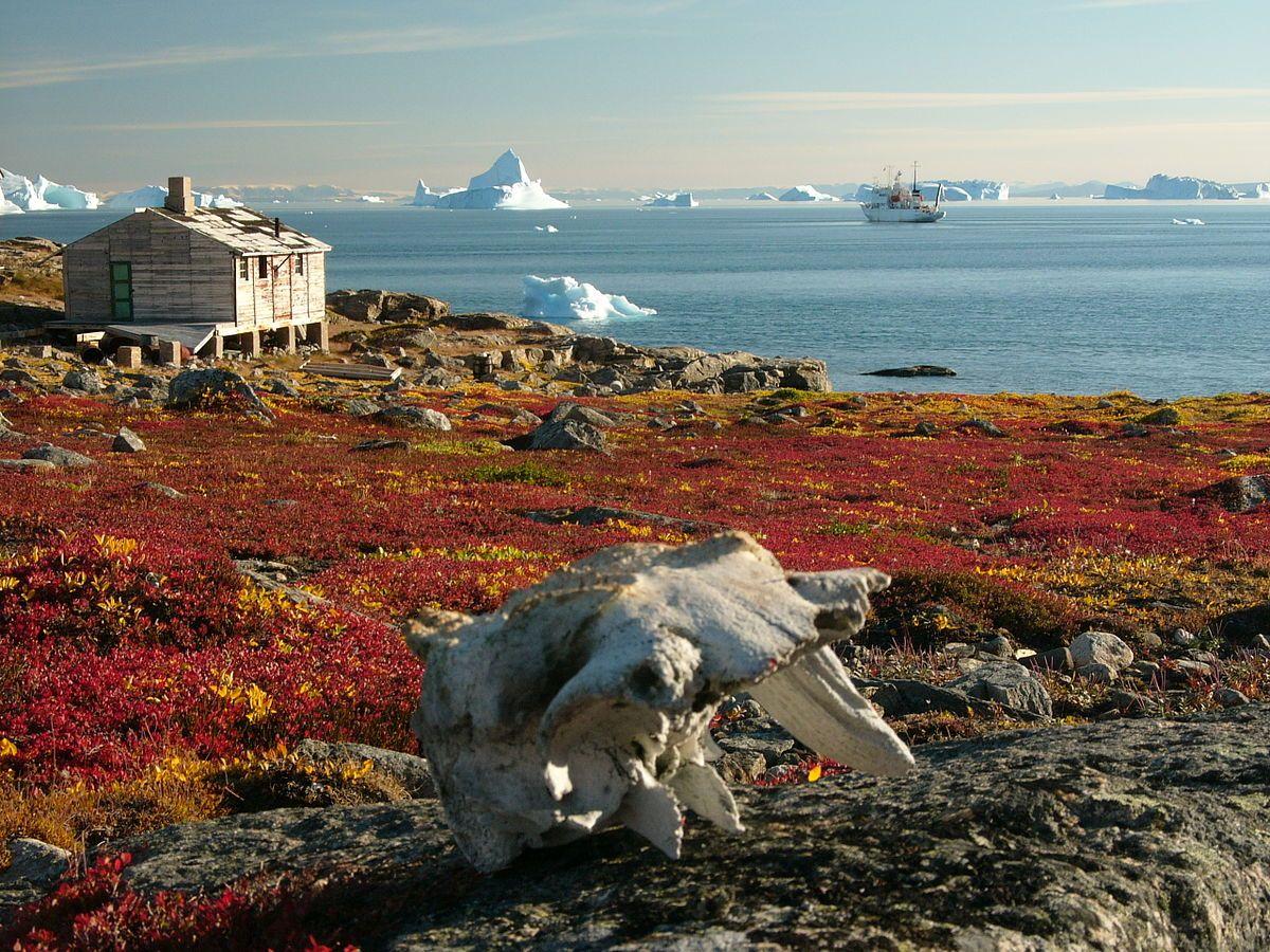 Pin by Ismael Portilla on Biomas terrestres Greenland