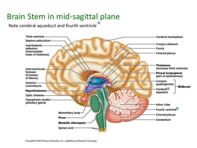 general-anatomy-19-b-41-638.jpg (638×479)   Challenge A Science ...