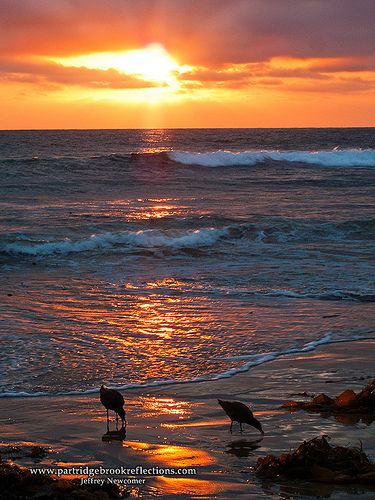 Sunset on Mission Beach, San Diego, California. Evening terns in foreground. c.