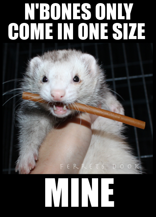pin ferret meme on - photo #45