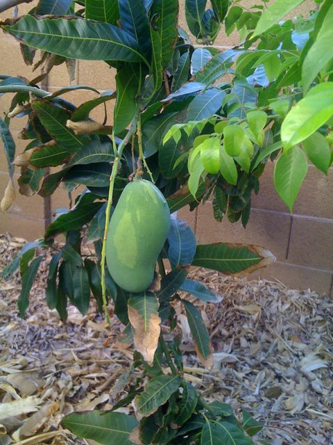Pin On Fruits And Veggies Cultivation