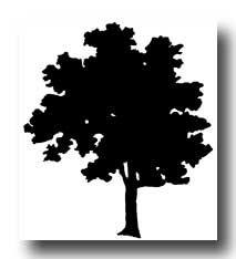 Tree silhouettes diy vorlagen fensterbilder und kinderfreizeit - Fadenkunst vorlagen ...