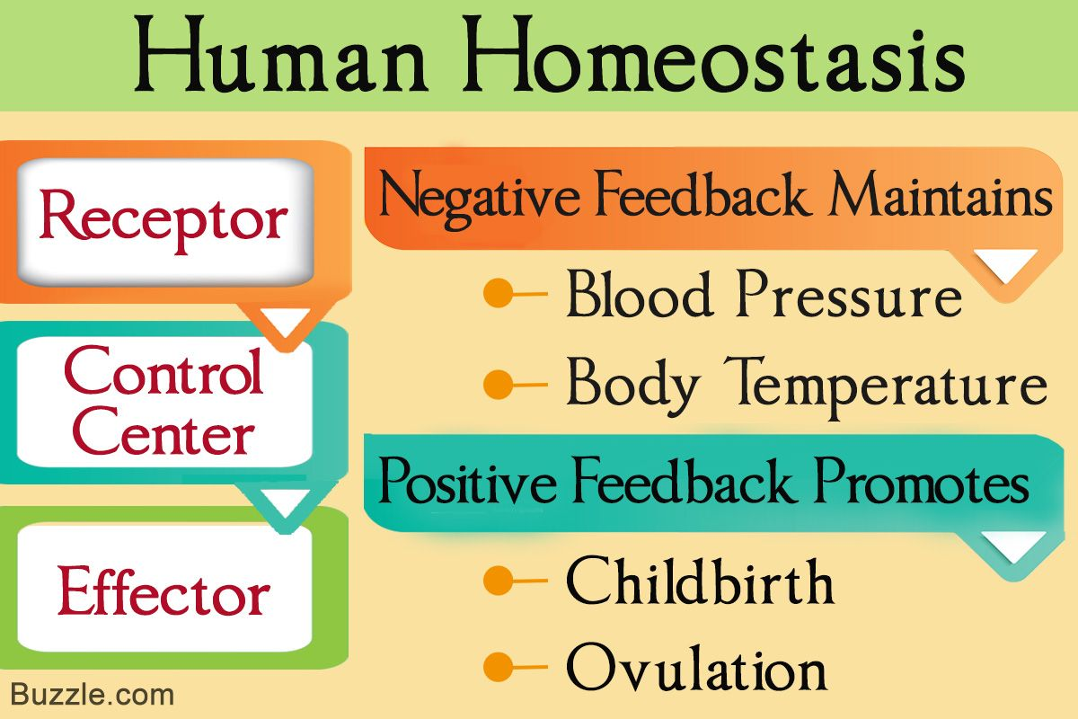 Amazing Understanding Negative And Positive Feedback In Homeostasis Download Free Architecture Designs Rallybritishbridgeorg