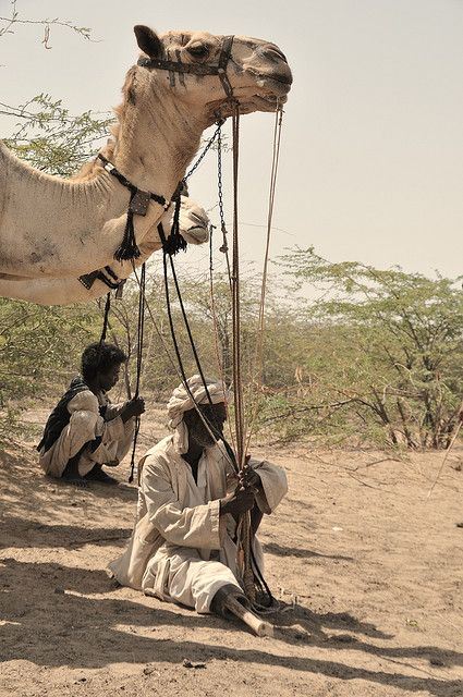 Port Sudan, Beja Camel Race