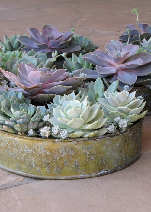 24 Succulent Centerpieces For Your Reception Table | Weddingomania