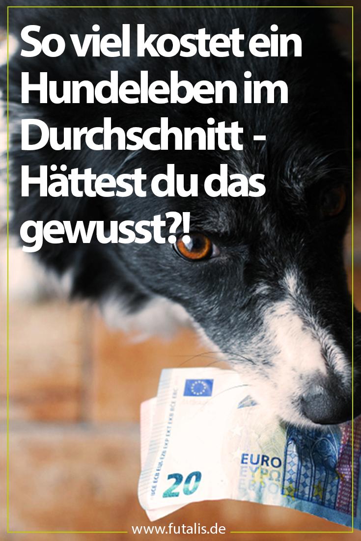 Dänemark Hunde Getötet