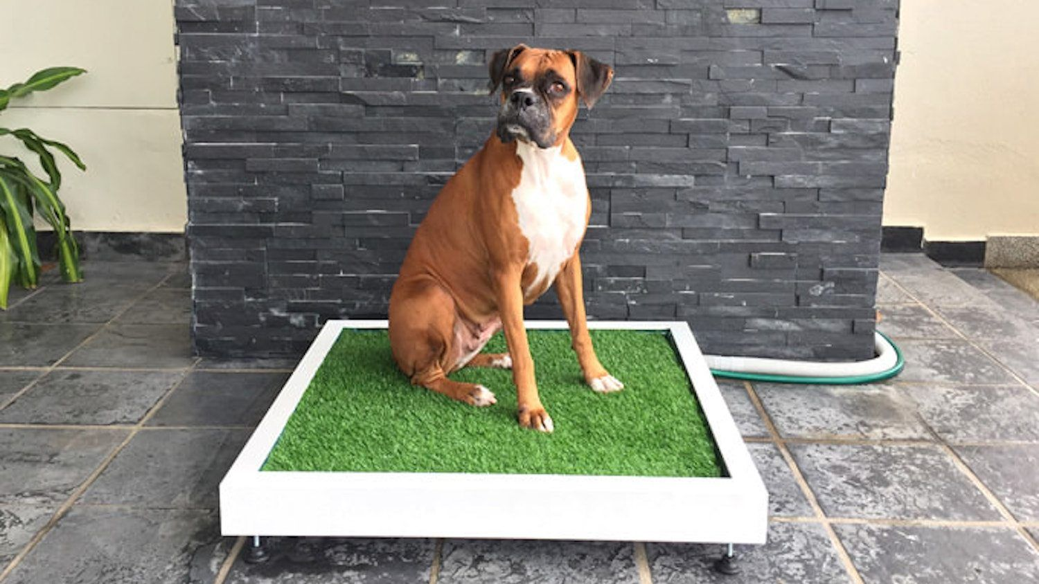 This Patch Of Fake Grass Flushes Like A Toilet For Your Dog Dog