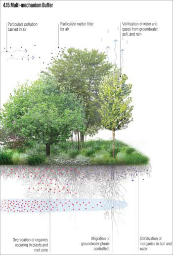 It S Time To Take Phytoremediation Seriously Landscape Diagram