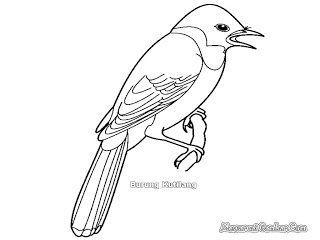 Burung Kutilang Dengan Gambar Burung Warna Gambar