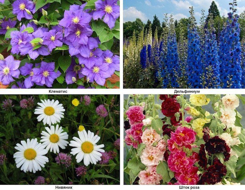 картинки цветов для клумб с названиями изображении должно быть