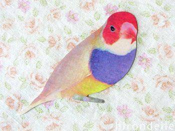 小鳥のミニメッセージカード インコ