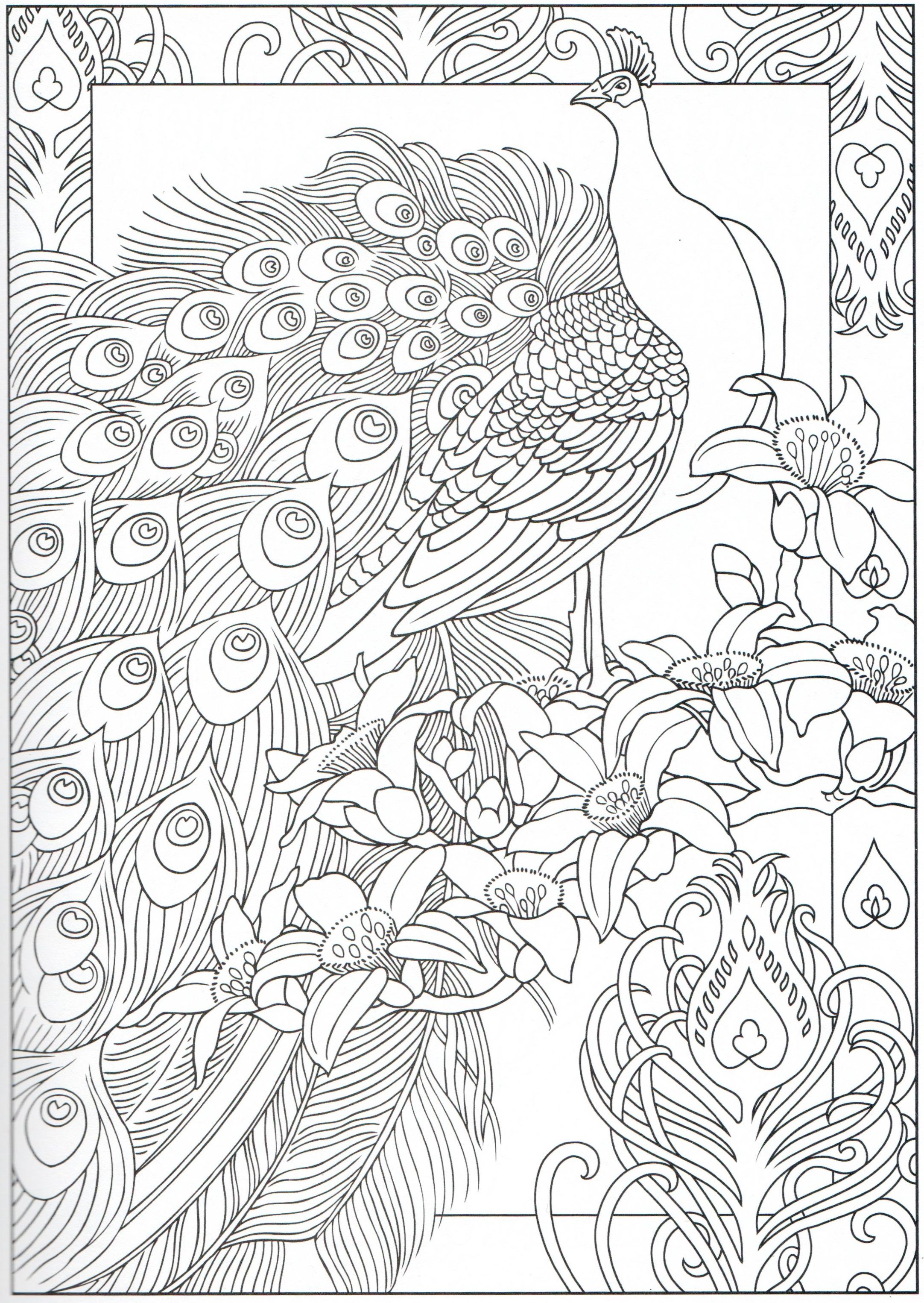peacock coloring page 29 31 color pages stencils templates