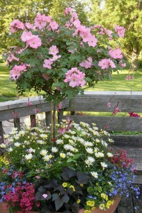 Pin By Janine O Donnell Stearman On Gardening With Images Rose Trees Garden Containers