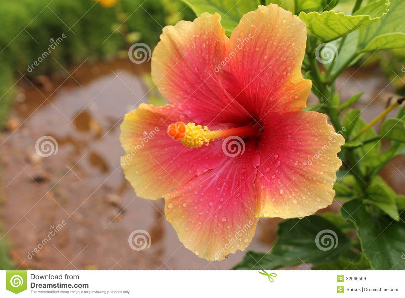 Selective Focus Photography Of Red Hibiscus Flower Photo Free Plant Image On Unsplash