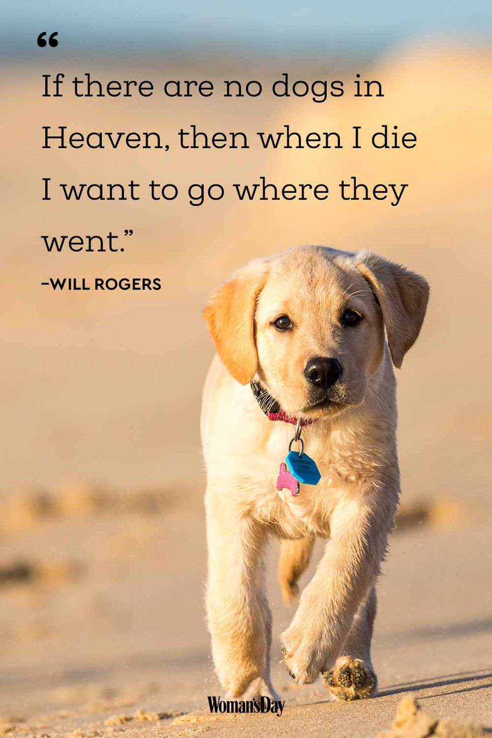 20 Best Dog Quotes That Perfectly Describe Your Fur Baby Best Dog Quotes Cute Dog Quotes Dog Heaven