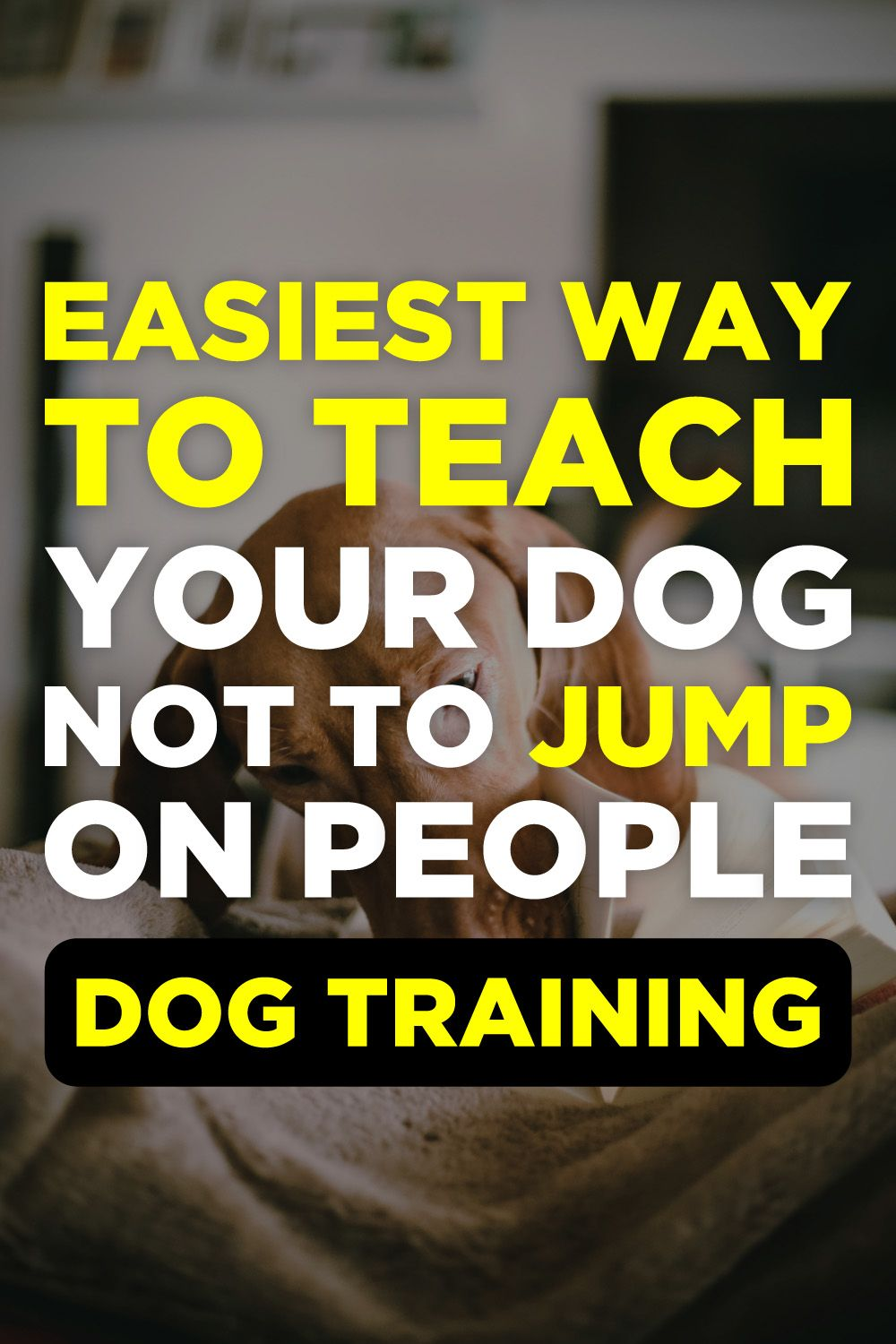 Brain Training For Dogs Review Dog Training Dog Training Videos