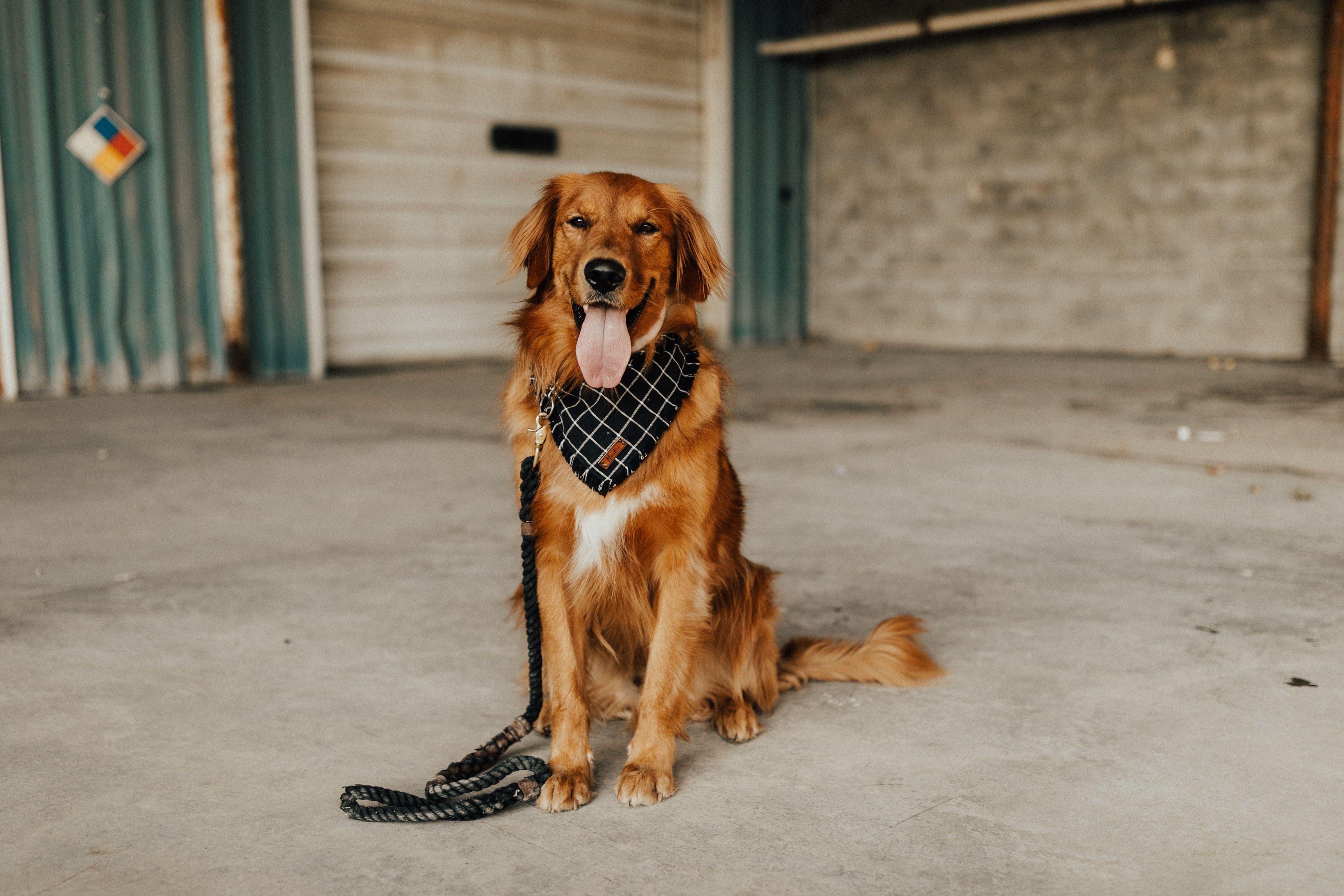 Hoot And Co Pet Bandana Dog Bandana Plaid Bandana Frayed Dog Bandana Pet Lover Gift Scarf Bandana Set Ma Dog Supplies Online Dog Store Pet Accessories