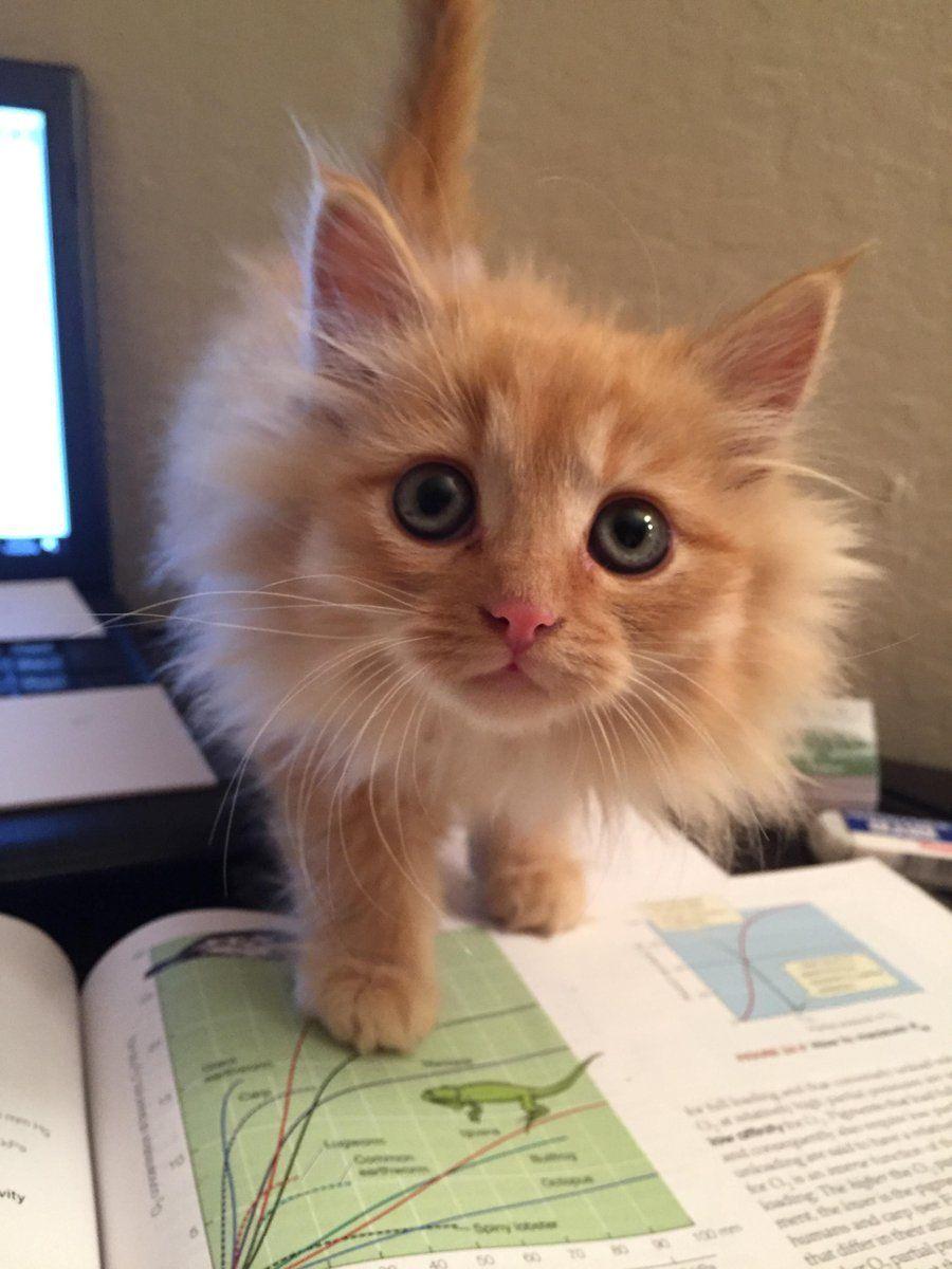 Baby Face Kitties Pinterest