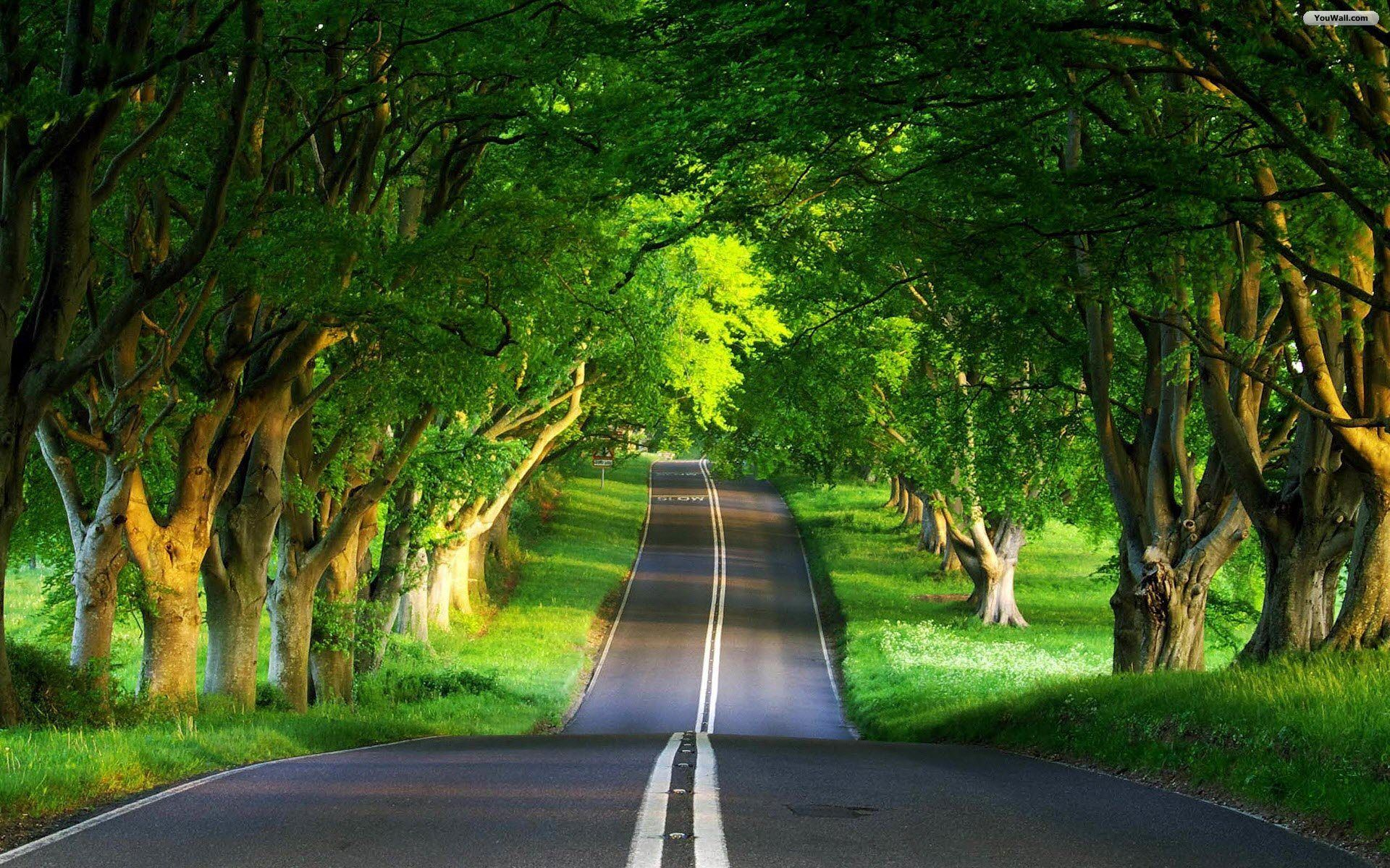 Green Road Wallpapers Http Wallpapers Ae Green Road Wallpapers Html With Images Nature Desktop Wallpaper Hd Nature Wallpapers Nature Desktop