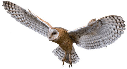 flying owl | Owl coloring pages, Harry potter clip art, Owls drawing