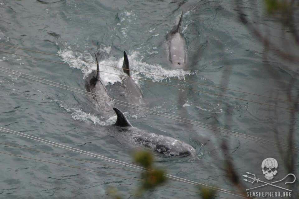Life!  They are fighting for their right to live #tweet4dolphins