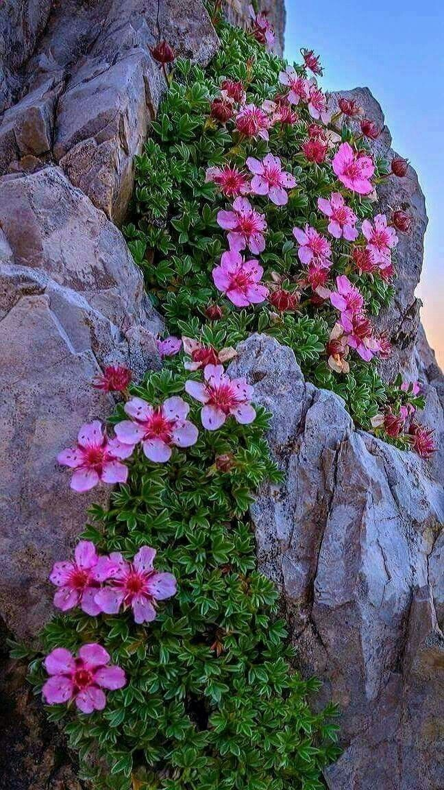 rocks and flowers - Bob's Gardening #garden #gardens  #gardening #curbappeal #rockgardens