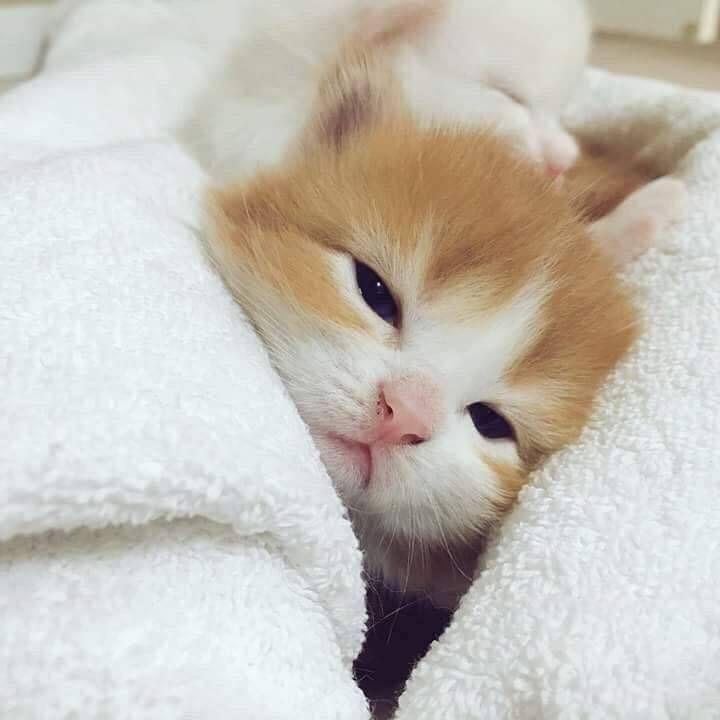 Pin Von Zsuzsanna Schenk Auf Tierisch Haustiere Baby Katzen Tiere