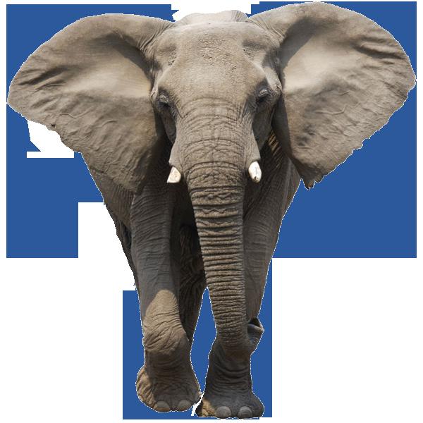 Elephant Free Download Png Png Image Elephants Photos Elephant Images African Elephant