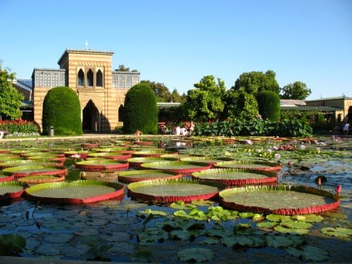 Panoramio Photo Of Wilhelma Botanischer Garten Botanischer Garten Wilhelma Stuttgart Stuttgart