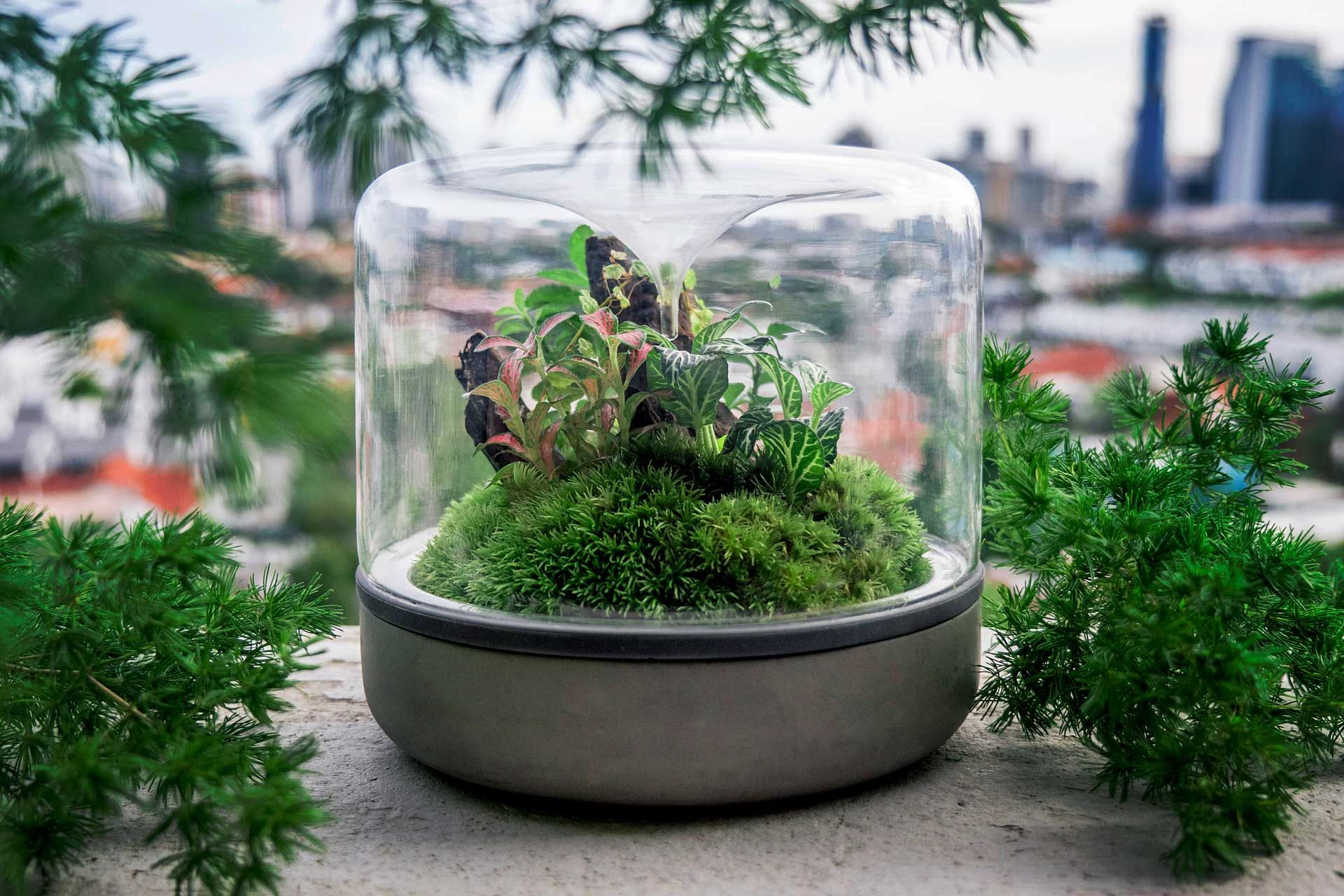 Pin By Terrarium Foru On Buy Beautiful Mini Landscape Garden In