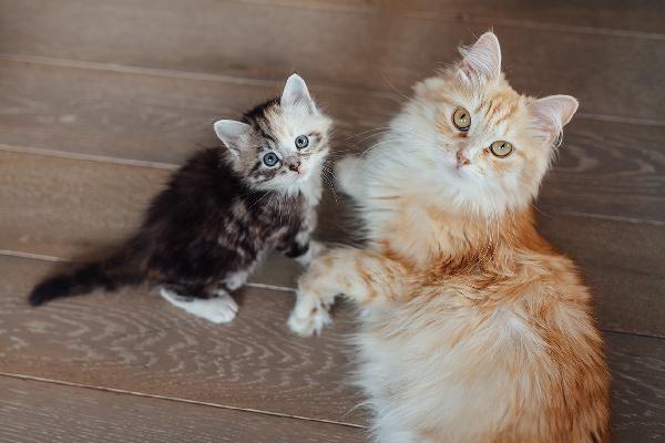 Kitty. Cute animals, Kittens cutest, Kitten images