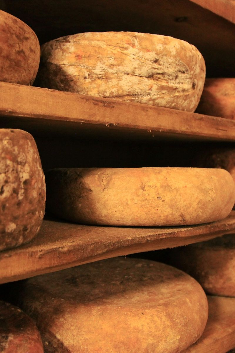 food, italian, italy, cheese