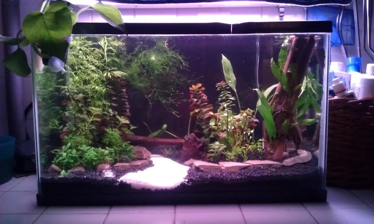 Ebeth 10 gallons your tanks indoor aquatic for Fish tank gallon calculator