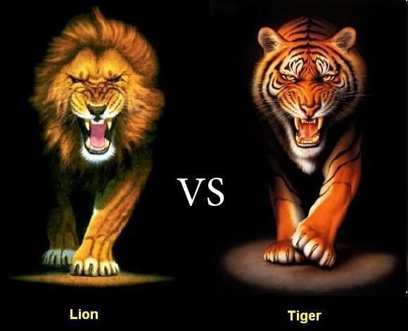 Who would win? Lion vs Tiger | Animal pic | Animals, Lion pictures