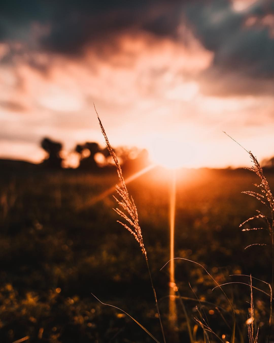 West Palm Beach Sunset Macro Photography Wheat Field 6 311 Likes 141 Comments Erick Ramirez